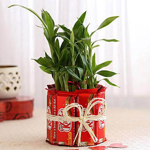 Magical Kitkat Arrangement with 2 Tier Lucky Bamboo Plant