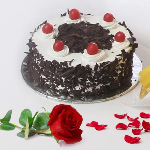 Delicious Black Forest Cake N Red Rose