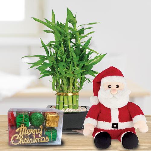 Two Layered Bamboo Plant N Santa Teddy Combo Gift