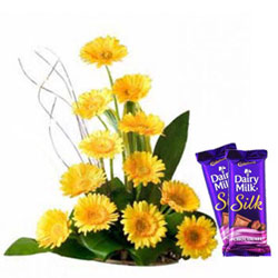 Ravishing Assorted Gerberas Bouquet with Dairy Milk Silk