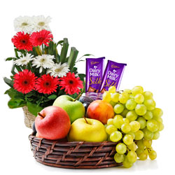 Radiant Gerberas Arrangement with Mixed Fruits Basket and Dairy Milk Silk