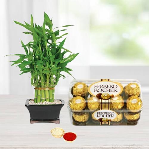 Ferrero Rocher Chocos N Bamboo Plant Combo