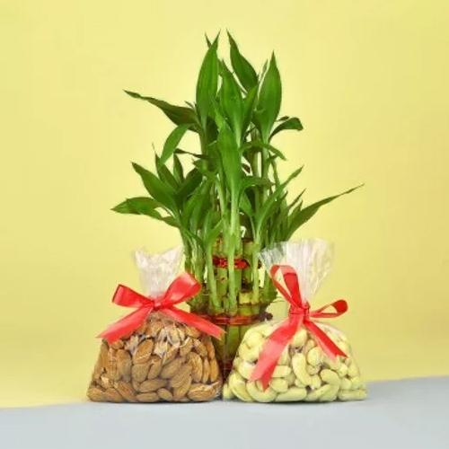 Exclusive Dry Fruits N Lucky Bamboo Gift Combo on Birthday