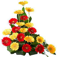 Brilliant 20 Colorful Gerberas Bouquet with Affection