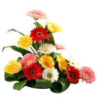 Cheerful 15 Assorted Gerberas in a Beautiful Bouquet