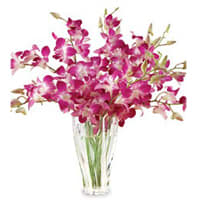 Delicate Orchids Arranged in a Glass Vase