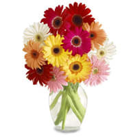 Elegant Arrangement of 15 Mixed Gerberas with Free Vase