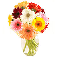 Dazzling Colorful Gerberas in a Glass Vase