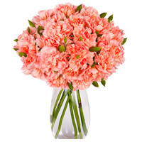 Pretty Pink Carnations in a Vase