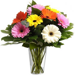 A Glass Vase full of MIxed Gerberas