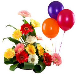 Pretty Arrangement of Mixed Gerberas N Balloons