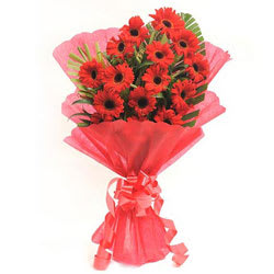 Pretty Red Gerberas Bunch