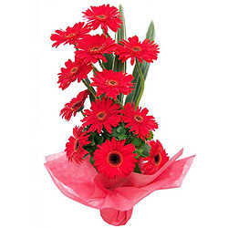Bright Red Gerberas Arrangement