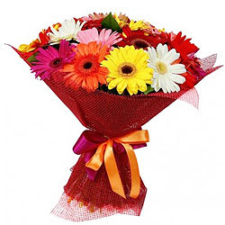Lovely Collection of Mixed Gerberas