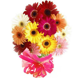 Tender Assemble of Fifteen Mixed Gerberas