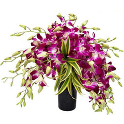 Splendid Orchids Arrangement in Glass Vase