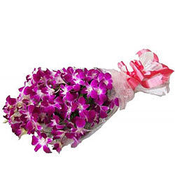 Vibrant Blooms Purple Orchid Stems Bunch