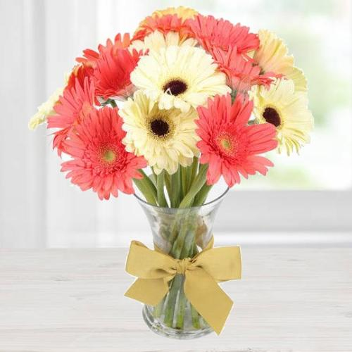 Reddish Pink N White Gerberas in a Vase