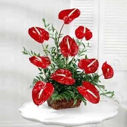 Magnificent Red Anthurium Arrangement