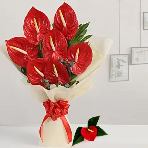 Marvelous Red Anthurium Bunch wrapped in Tissue