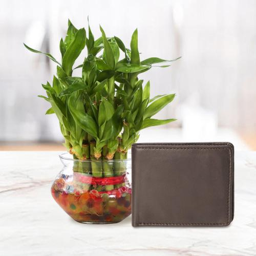 Attractive Mens Brown Leather Wallet from Rich Born with a 2 Tier Lucky Bamboo Plant for Good Luck