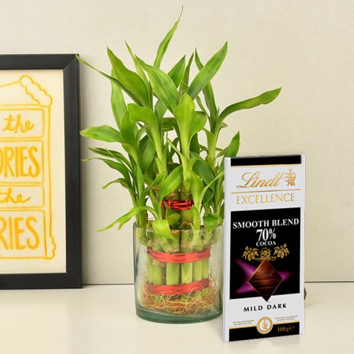 Amazing 2 Tier Lucky Bamboo Plant with Lindt Excellence Chocolate
