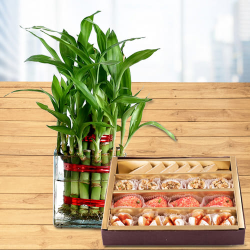 Two Layered Lucky Bamboo Stalks in Glass Pot with Haldiram Sweet Assortments