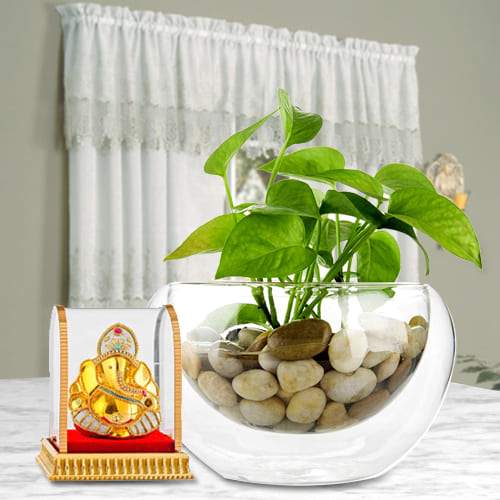 Classic Gift of Money Plant in a Glass Vase with Vinayak Murti