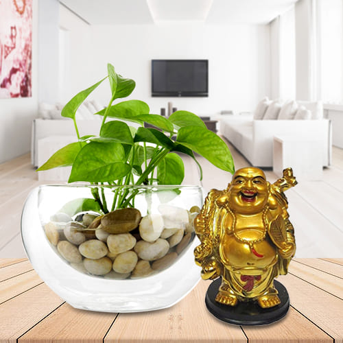 Good Luck Gift of Money Plant in a Glass Vase with Laughing Buddha Idol<br>