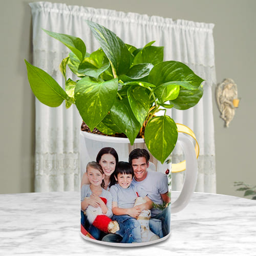 Elegant Selection of Money Plant in a Personalized Coffee Mug<br>