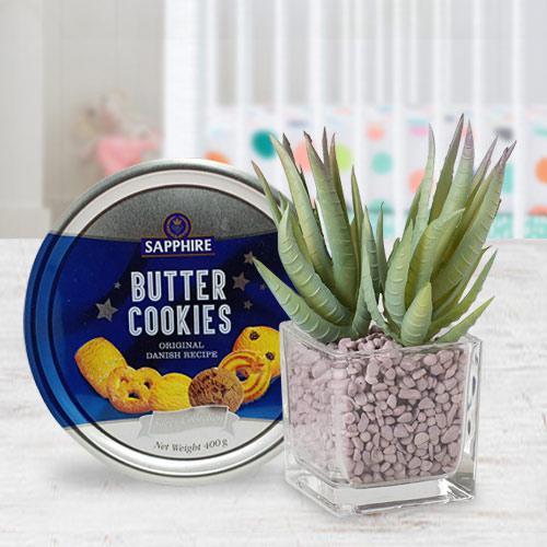 Decorative Present of Aloe Vera Plant with Cookies