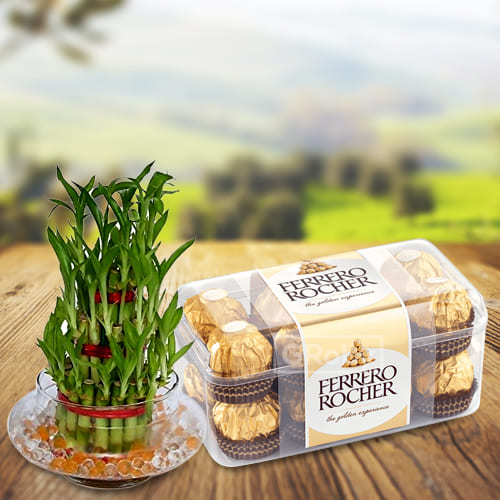 Attractive 2 Tier Lucky Bamboo Plant N Ferrero Rocher Chocolates Pack
