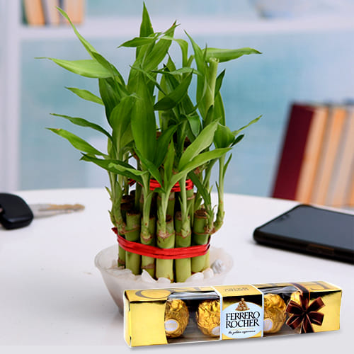 Wish Good Luck with 2 Layer Lucky Bamboo Plant in a Glass Pot with Chocolates