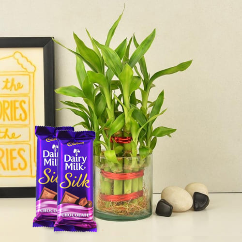 Remarkable 2 Tier Bamboo Plant with Cadbury Dairy Milk Silk Chocolates