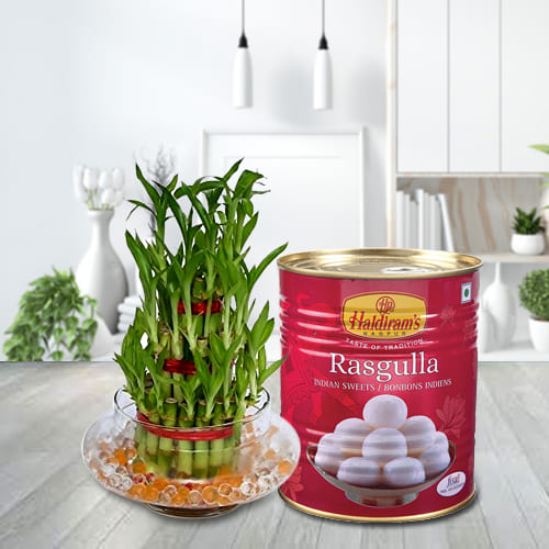 Special 2 Tier Lucky Bamboo Plant with Haldirams Rasgulla