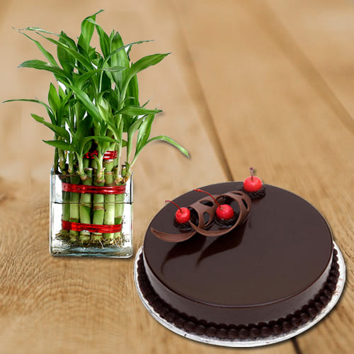 Exquisite Gift of Chocolate Flavor Cake with 2 Layer Good Luck Bamboo Plant in Glass Pot