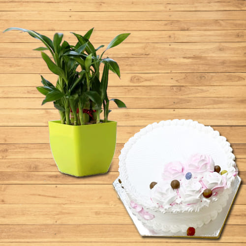 Happy Birthday Gift of Vanilla Cake with Double Layered Lucky Bamboo Plant<br>