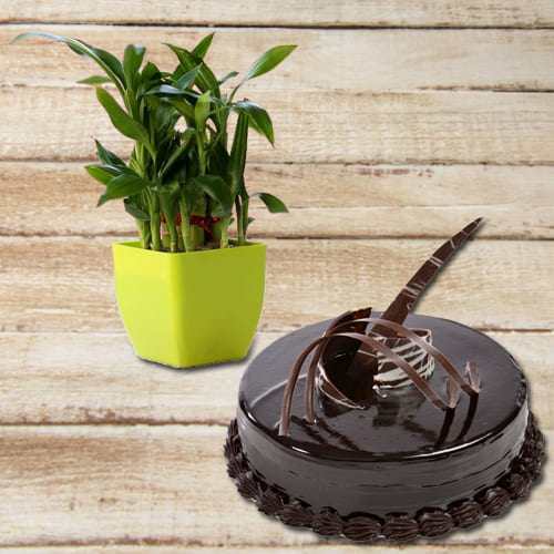 Aesthetic Duel Tier Good Fortune Bamboo Plant with Chocolate Truffle Cake