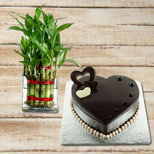 Auspicious Present of 2 Tier Lucky Bamboo Plant in a Glass Pot with Heart Shape Cake