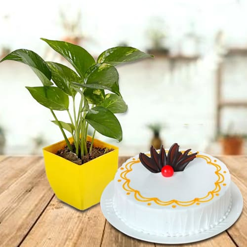 Good Fortune Money Plant in Plastic Pot with Delectable Vanilla Cake<br>