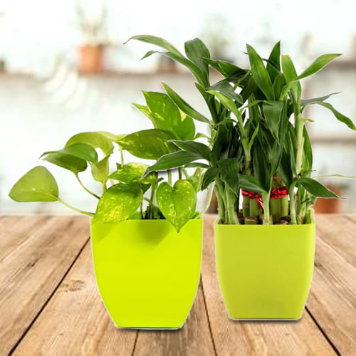 Charming Pairing of Two Exotic Green Plants