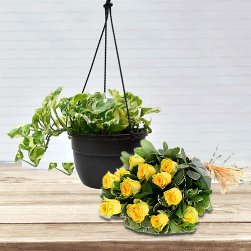 Exotic Arrangement of Yellow Roses with Hanging Money Plant