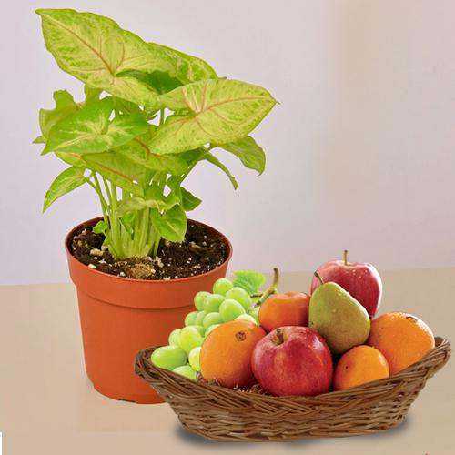 Garden Fresh Fruit Basket N Air Purifying Plant Combo
