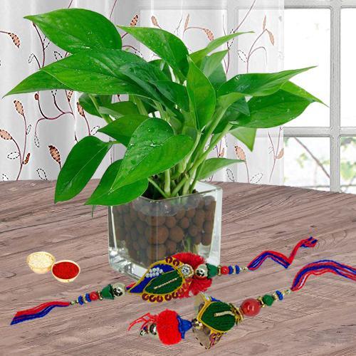 Bhaiya Bhabhi Set with Money Plant in Glass Pot