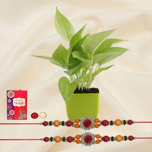 Send Rakshabandhan Wishes with a Money Plant & 2 Rakhis