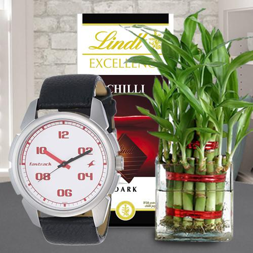 Exclusive Combo of Fastrack Watch Lindt Chocolate N Bamboo Plant
